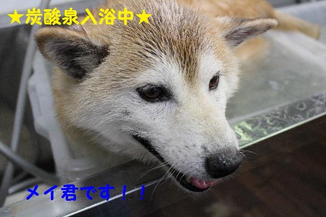 物欲!!_b0130018_19444071.jpg
