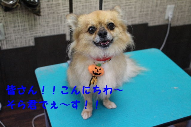 物欲!!_b0130018_19461873.jpg