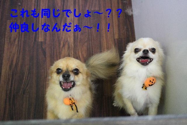 物欲!!_b0130018_1947127.jpg