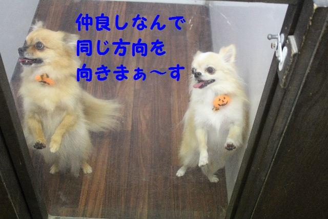 物欲!!_b0130018_1947270.jpg