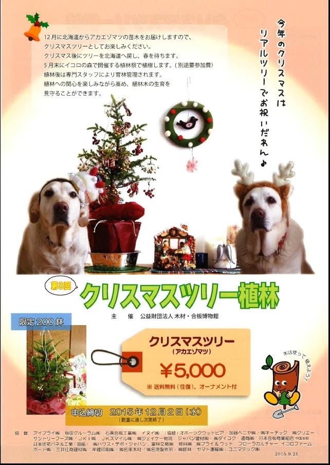 クリスマスツリー植林しませんか?_f0274218_13560379.jpg
