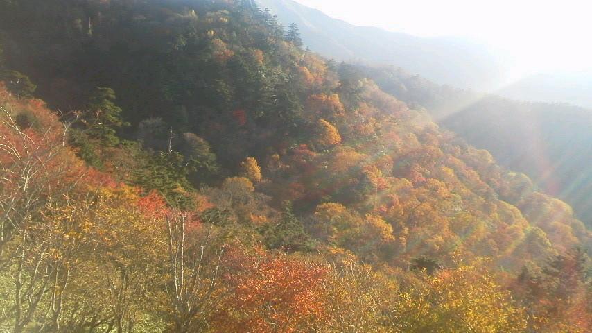 10月19日 朝の気温4℃。今は 中腹西島駅周辺に 色づきがとてもきれいです。暖かく、半袖の登山者が目だった一日でした。_c0089831_514183.jpg