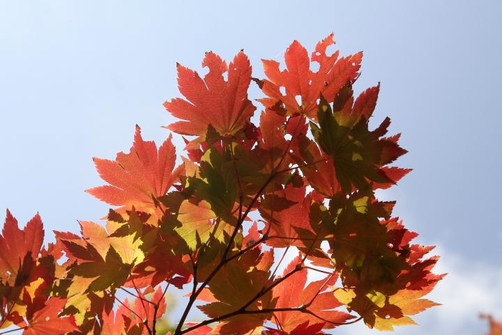 我が家の庭も秋真っ盛り_d0012134_0182838.jpg