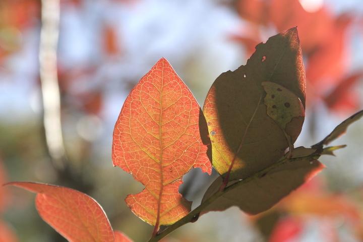 我が家の庭も秋真っ盛り_d0012134_0204954.jpg