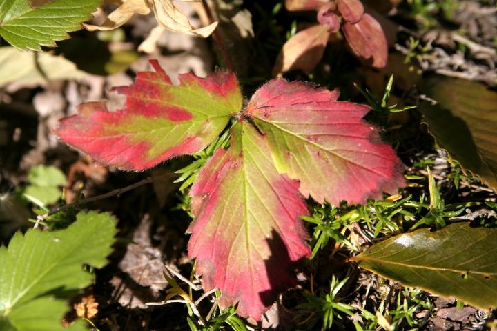 我が家の庭も秋真っ盛り_d0012134_020895.jpg