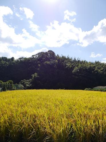 お子様向けイベント「稲刈り体験」を実施しました。_d0284244_17482377.jpg