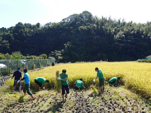 お子様向けイベント「稲刈り体験」を実施しました。_d0284244_17504596.jpg