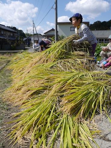 お子様向けイベント「稲刈り体験」を実施しました。_d0284244_1751145.jpg