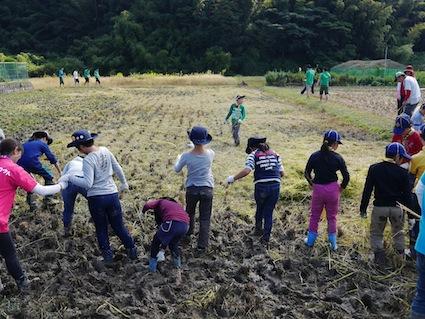 お子様向けイベント「稲刈り体験」を実施しました。_d0284244_17514483.jpg