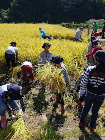 お子様向けイベント「稲刈り体験」を実施しました。_d0284244_1751486.jpg
