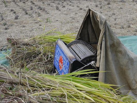 お子様向けイベント「稲刈り体験」を実施しました。_d0284244_17515998.jpg