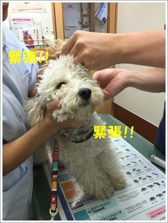 大祐、耳の中にカビ菌が(◎ー◎;)ビックリ_b0175688_10512587.jpg