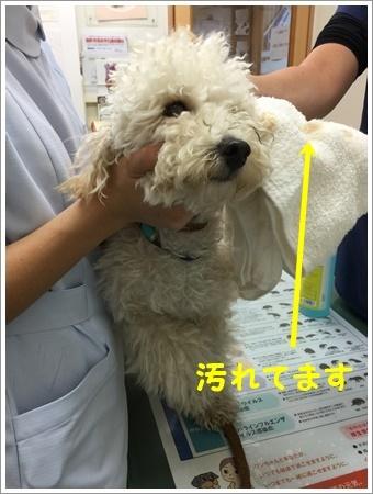 大祐、耳の中にカビ菌が(◎ー◎;)ビックリ_b0175688_10522678.jpg