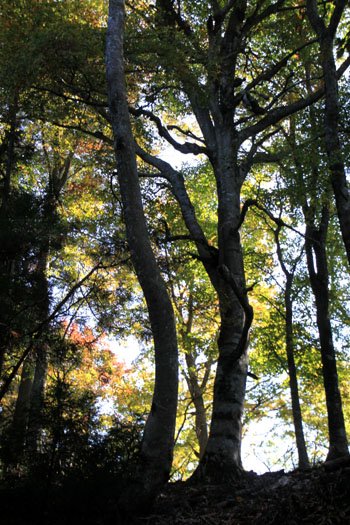 ブナ林を歩く_e0048413_20373634.jpg