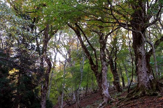 ブナ林を歩く_e0048413_2037859.jpg