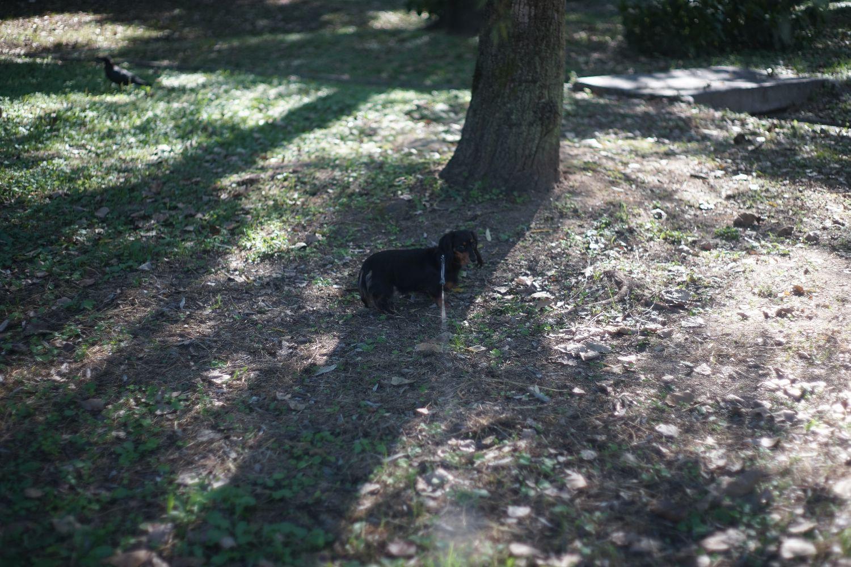 MC ロッコール PF 58mmF1.4 で 緑地公園へ_b0069128_110576.jpg