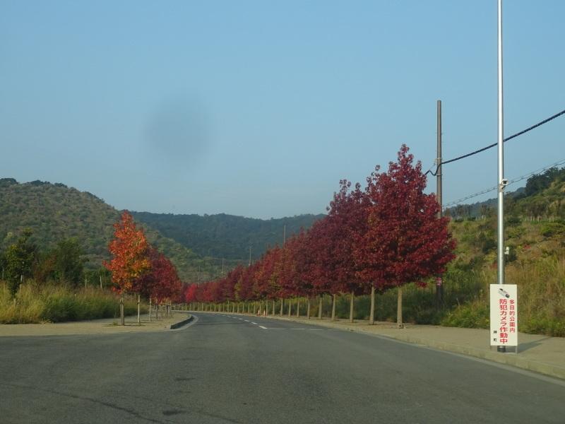 多奈川財産区「竹の里」訪問_c0108460_16103104.jpg
