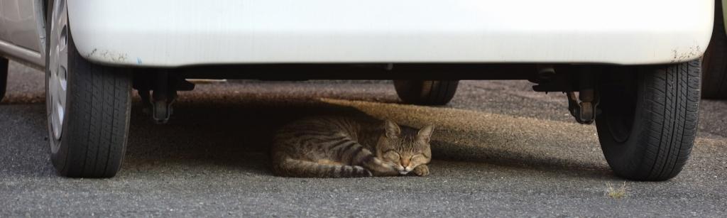猫餌やり禁止条例_a0016161_21233942.jpg