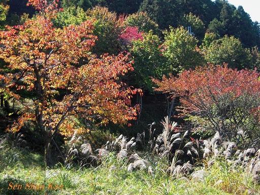 比叡山から八瀬へ_a0164068_1448314.jpg
