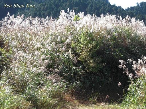 比叡山から八瀬へ_a0164068_14483894.jpg