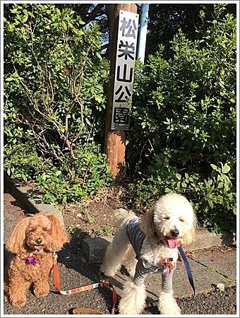大祐、初めてのお散歩コースに元気いっぱい!!_b0175688_22170019.jpg