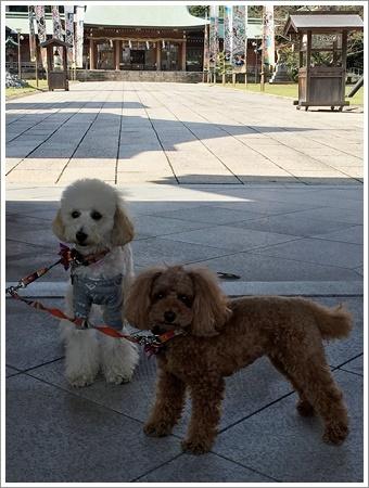 大祐、初めてのお散歩コースに元気いっぱい!!_b0175688_22185560.jpg