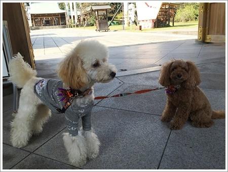 大祐、初めてのお散歩コースに元気いっぱい!!_b0175688_22185885.jpg