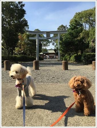 大祐、初めてのお散歩コースに元気いっぱい!!_b0175688_22252001.jpg