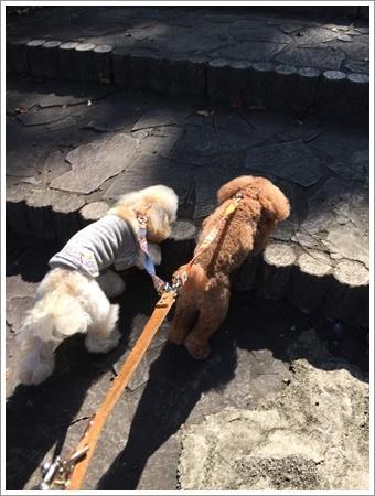 大祐、初めてのお散歩コースに元気いっぱい!!_b0175688_22252587.jpg