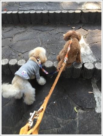 大祐、初めてのお散歩コースに元気いっぱい!!_b0175688_22252884.jpg
