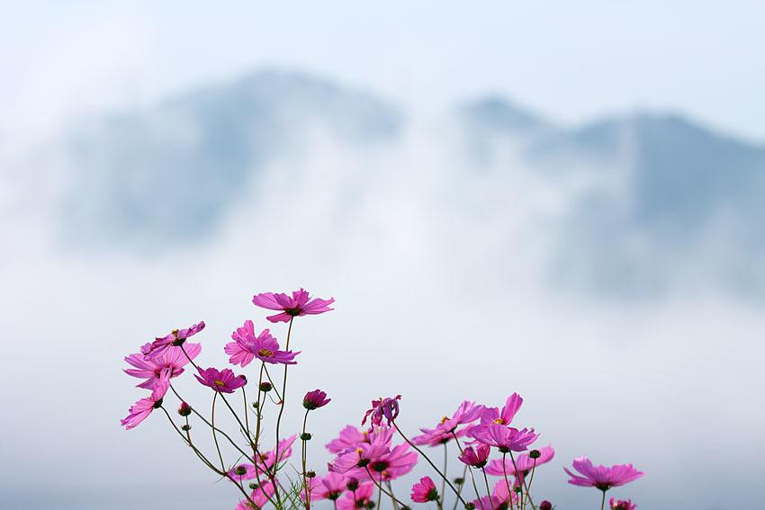 霧の朝_c0067040_21091996.jpg