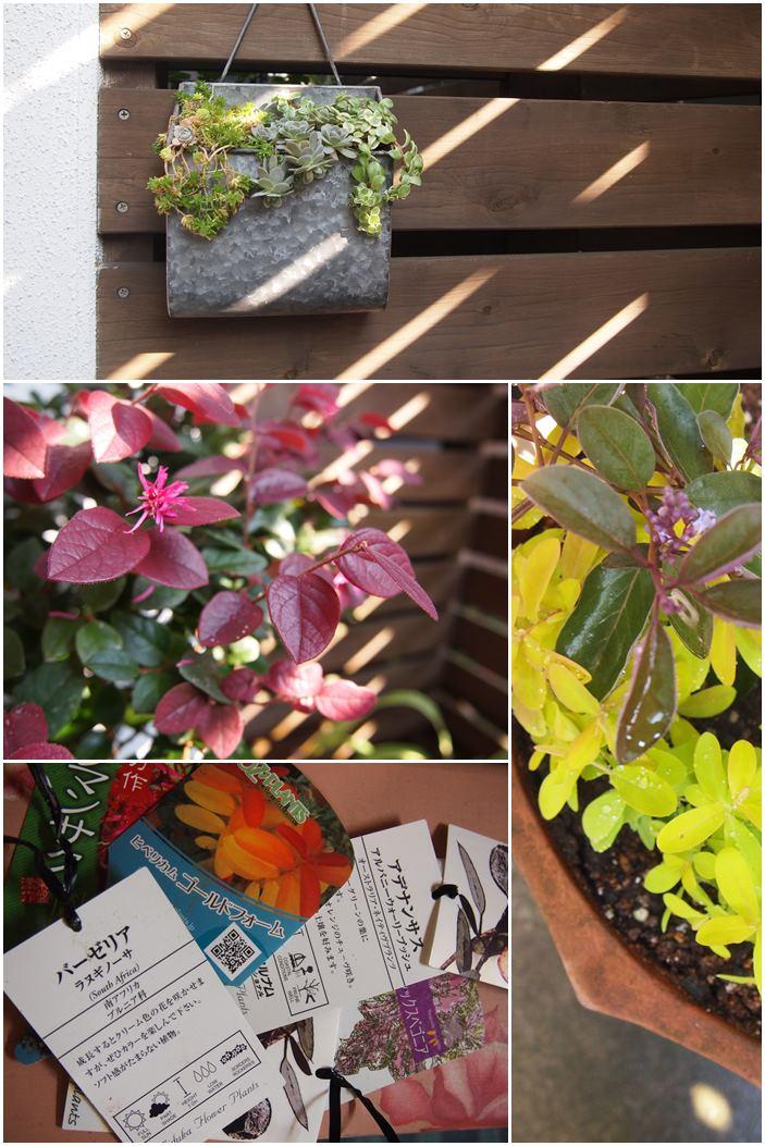今朝の庭☆植え込み開始_c0152341_23233033.jpg
