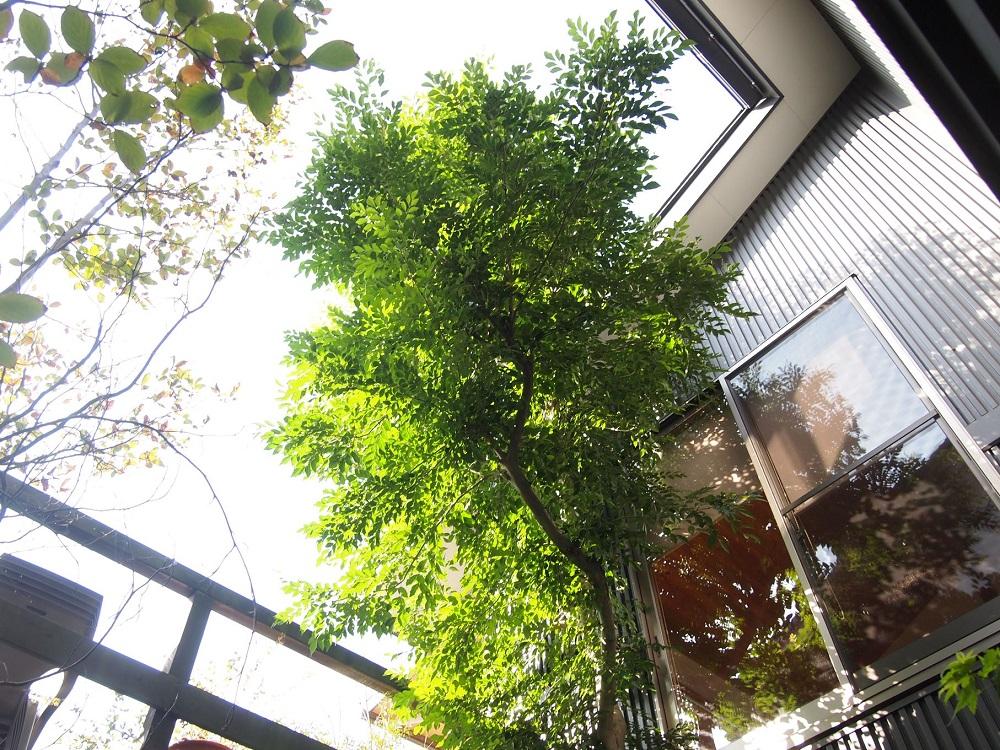 今朝の庭☆植え込み開始_c0152341_2362310.jpg