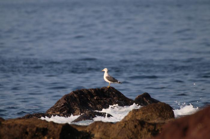 2015.10.22 待鳥来らず・真鶴岬・ヒヨドリ他(The bird which I was waiting did not come.)_c0269342_21285502.jpeg