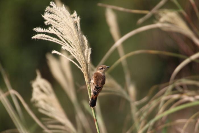 2015.10.22 待鳥来らず・真鶴岬・ヒヨドリ他(The bird which I was waiting did not come.)_c0269342_21310862.jpeg
