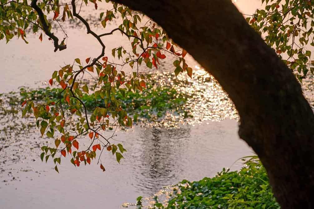 秋の気配(江津湖)_d0238245_01445803.jpg