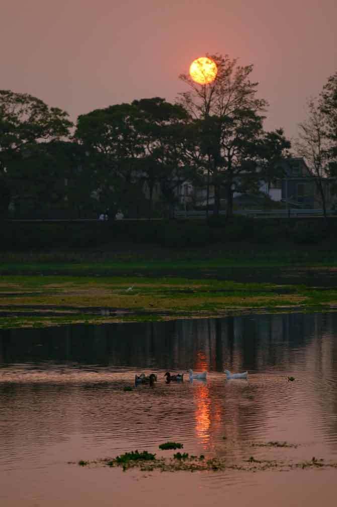 秋の気配(江津湖)_d0238245_01445828.jpg