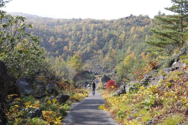 北軽井沢の秋は今が盛りです_c0341450_22143778.jpg