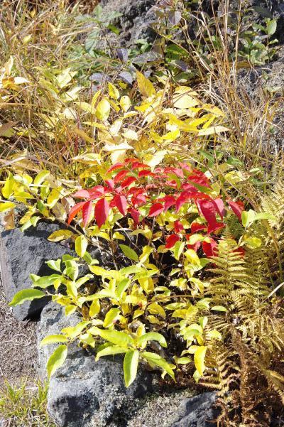 北軽井沢の秋は今が盛りです_c0341450_22145991.jpg
