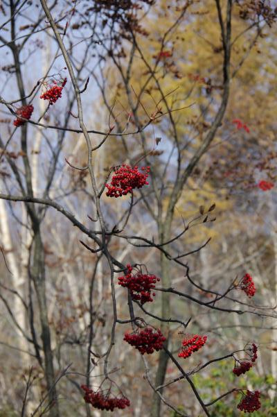 北軽井沢の秋は今が盛りです_c0341450_22152346.jpg