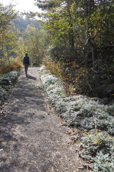 北軽井沢の秋は今が盛りです_c0341450_22155641.jpg