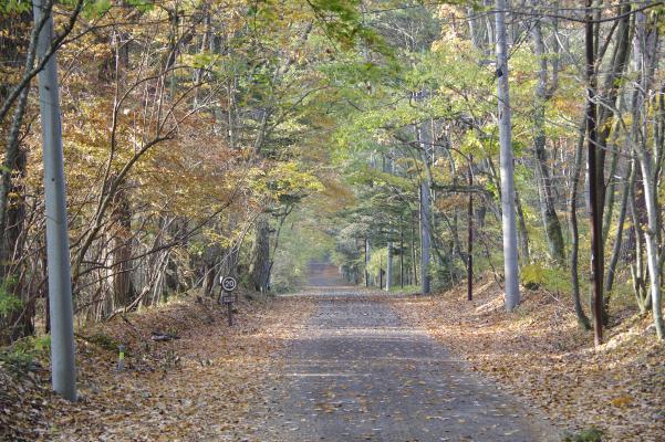 北軽井沢の秋は今が盛りです_c0341450_222333100.jpg