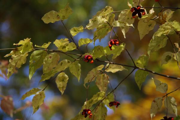 北軽井沢の秋は今が盛りです_c0341450_22273570.jpg