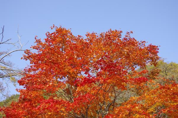 北軽井沢の秋は今が盛りです_c0341450_22292478.jpg