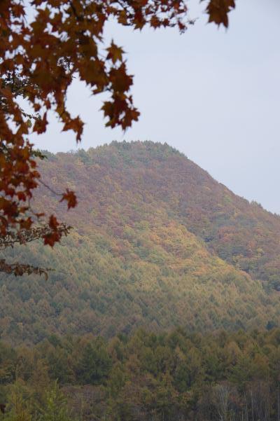 北軽井沢の秋は今が盛りです_c0341450_22295928.jpg