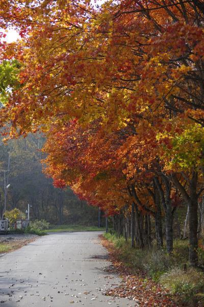 北軽井沢の秋は今が盛りです_c0341450_22302548.jpg