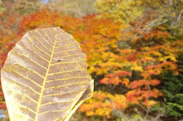 北軽井沢の秋は今が盛りです_c0341450_2230529.jpg