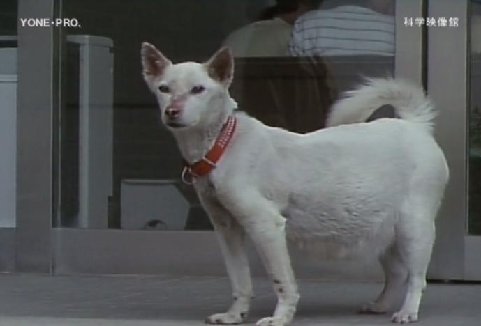 本日の配信映画は「愛犬の生命を守るために―犬フィラリア病の予防―」_b0115553_104425.png