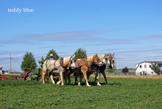 Amish country  アーミッシュカントリーへ_e0253364_993338.jpg