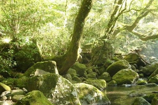 菊池渓谷 撮影_f0176370_15463584.jpg